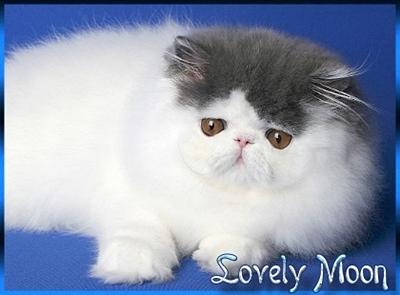 An den Beitrag angehängtes Bild: http://www.lovelymoon.de/lovelybanner4.jpg